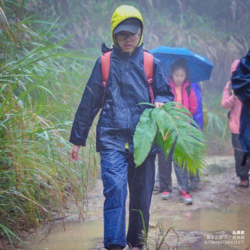 李昕蕾-20171125徒步-雨中,采摘叶子